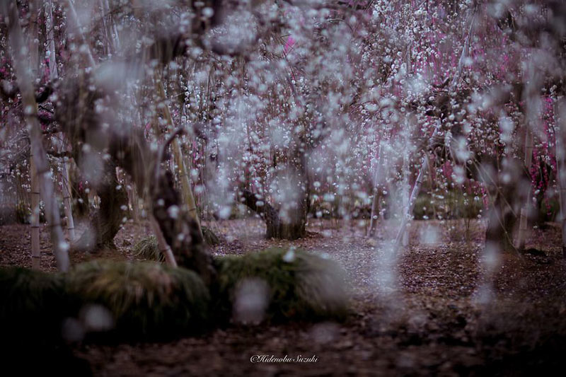 i-captured-spring-in-japan__880