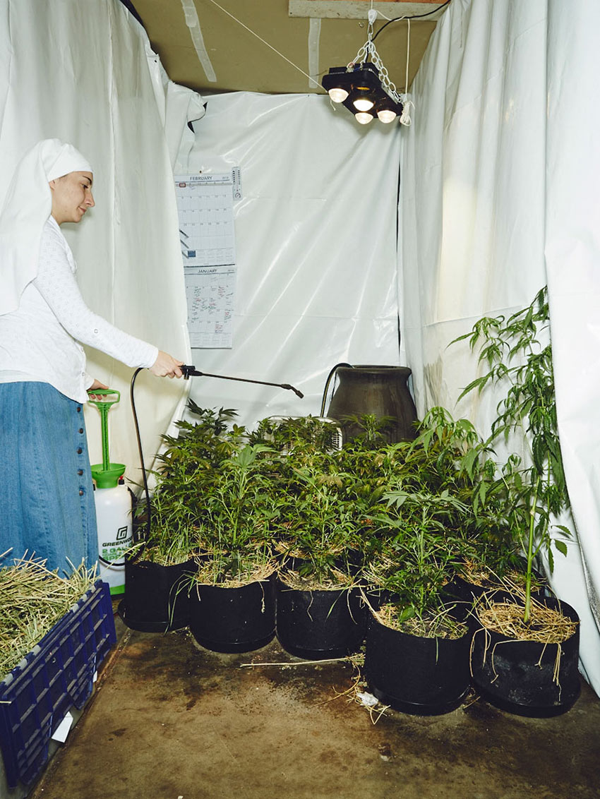 nuns-grow-marjuana-sisters-of-the-valley-shaughn-crawford-john-dubois-23