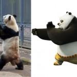 В японском зоопарке живет кунг-фу панда