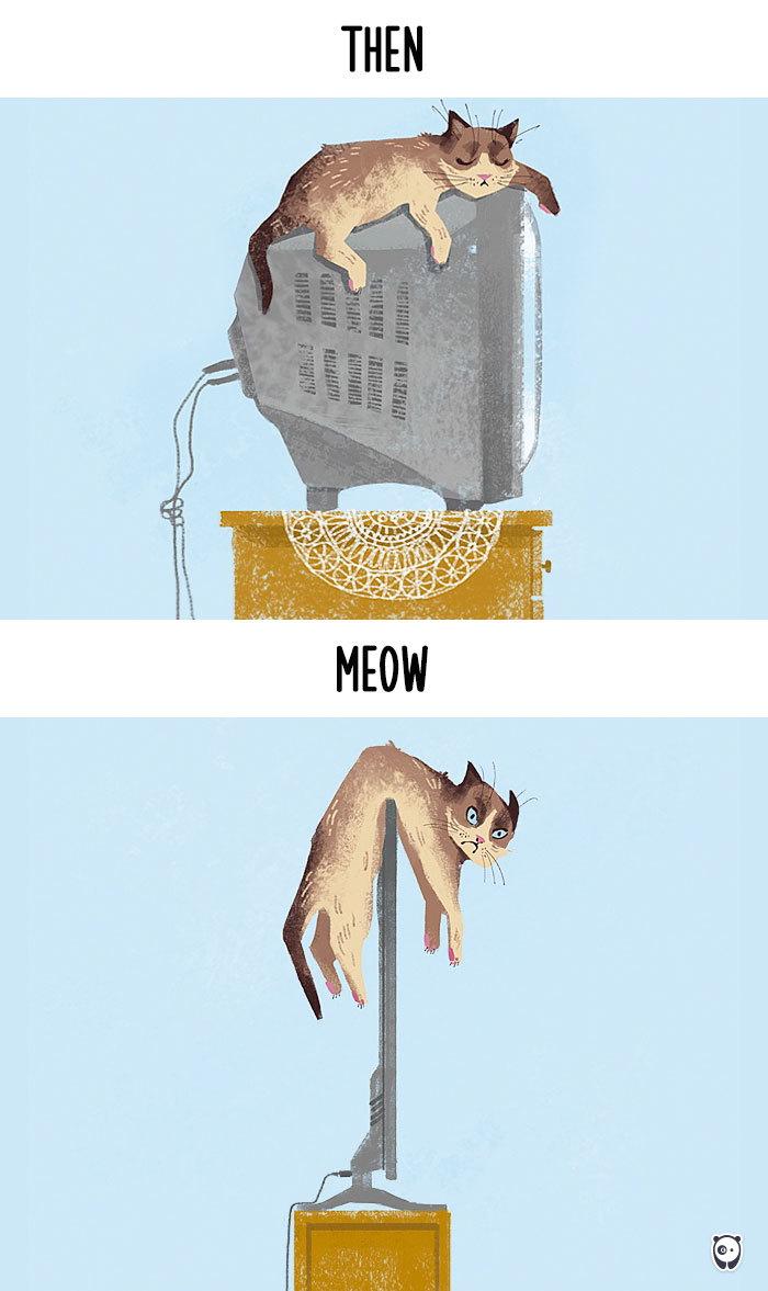 01-cats-change-life