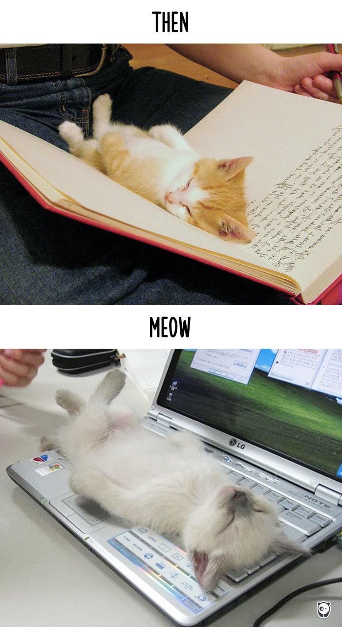 02-cats-change-life