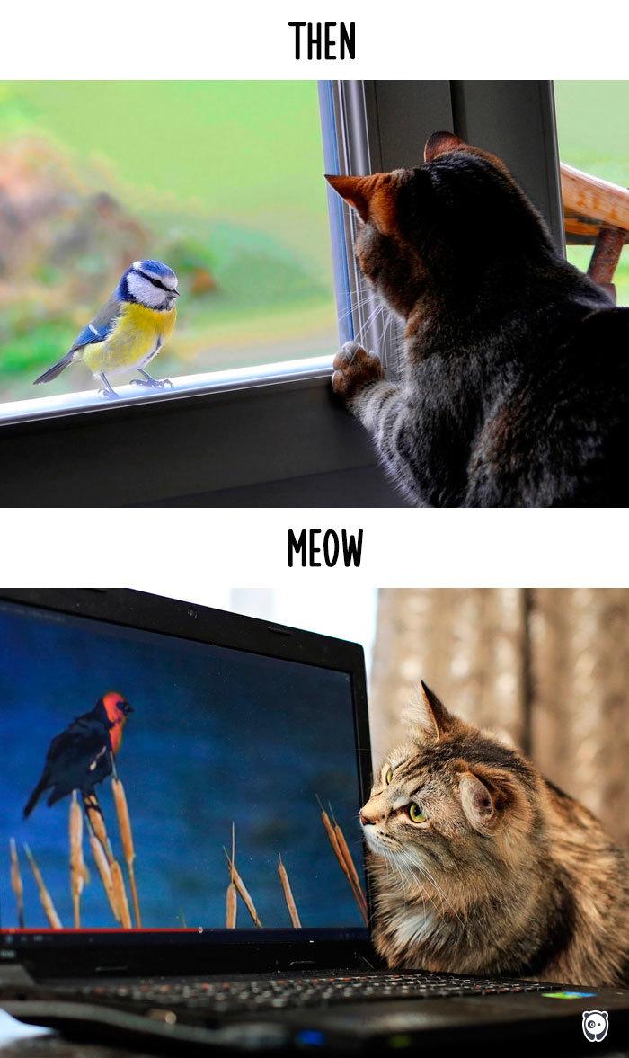 05-cats-change-life