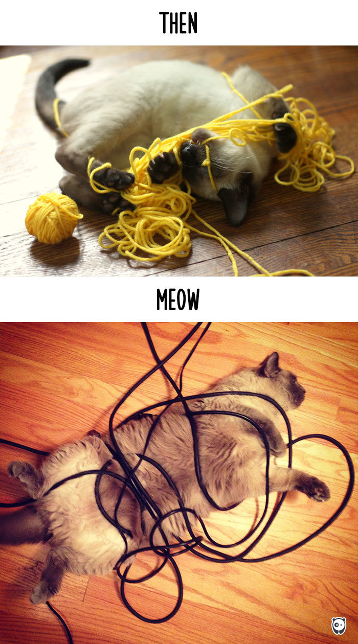 06-cats-change-life