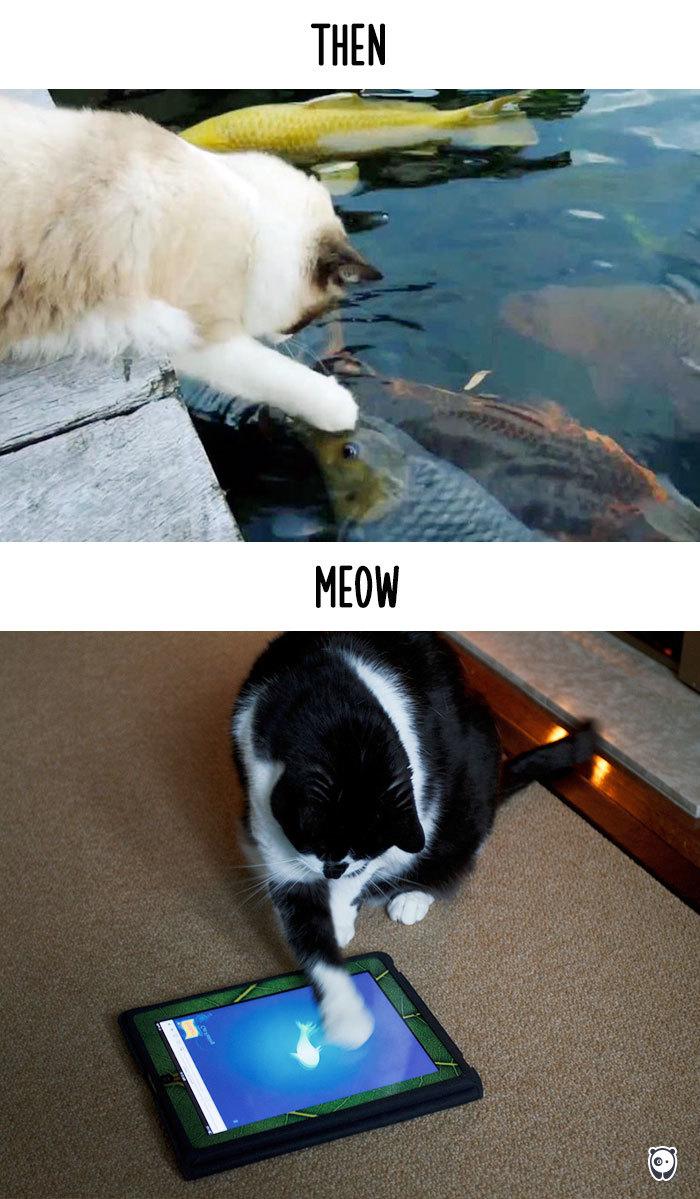 07-cats-change-life