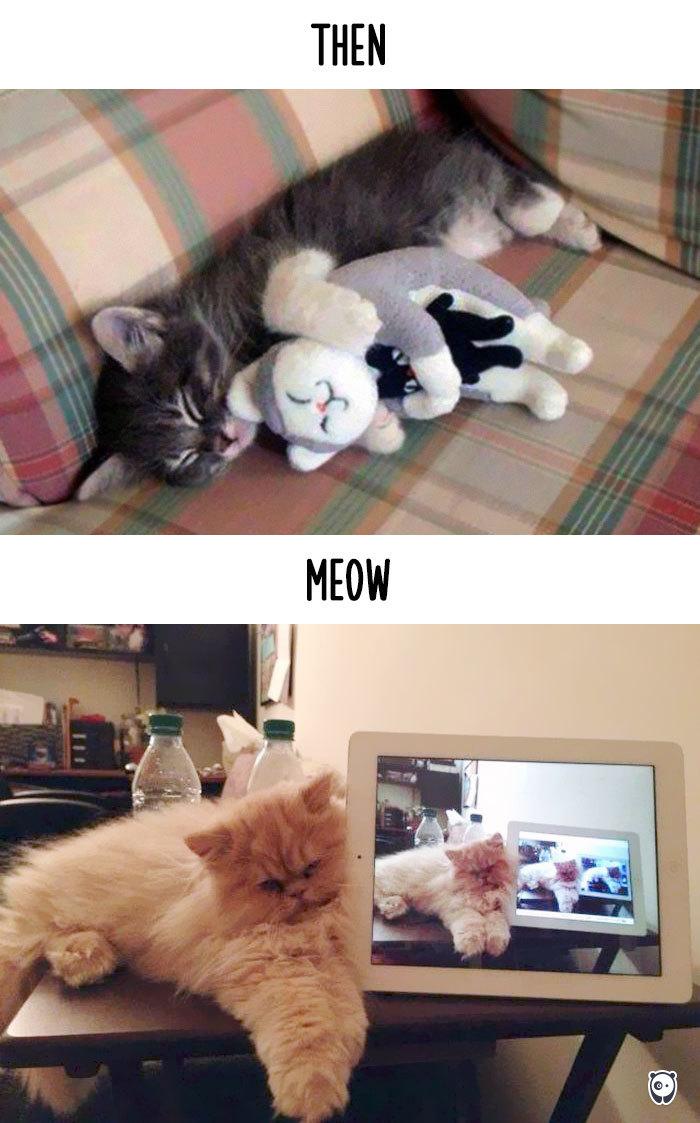 08-cats-change-life