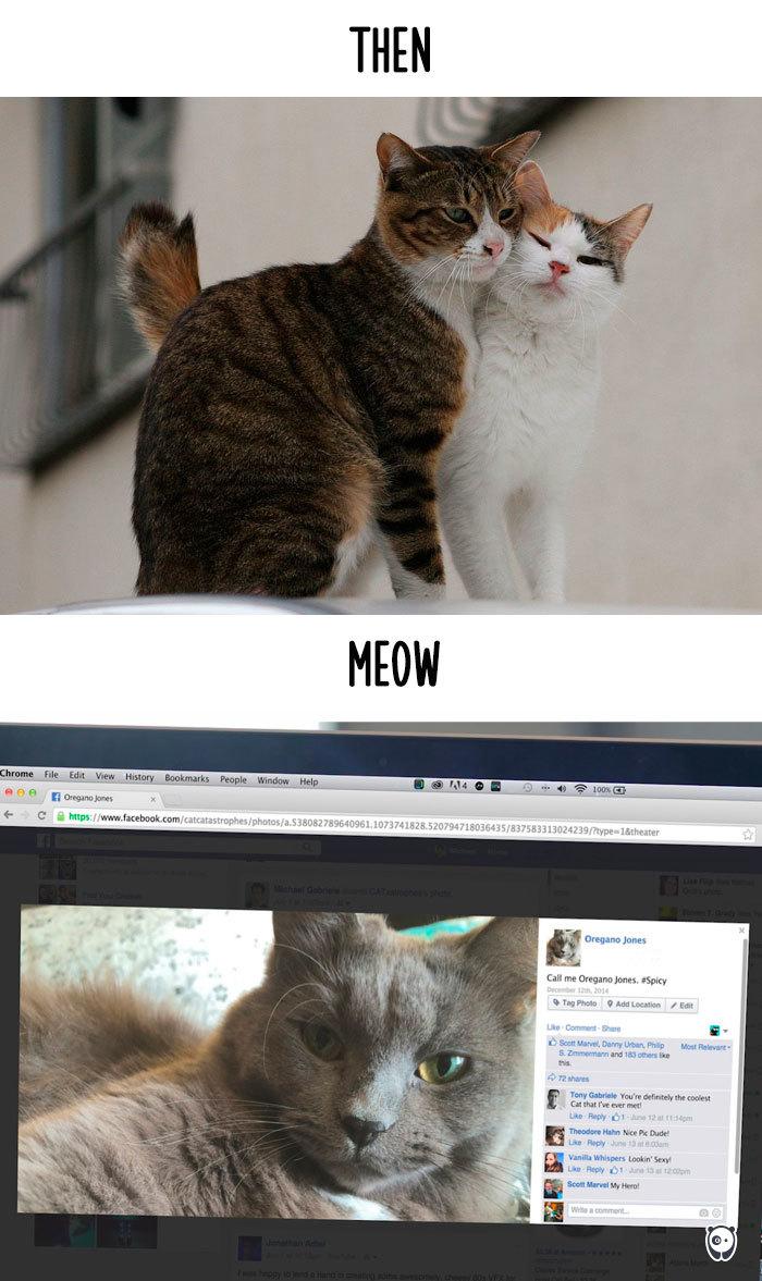 09-cats-change-life