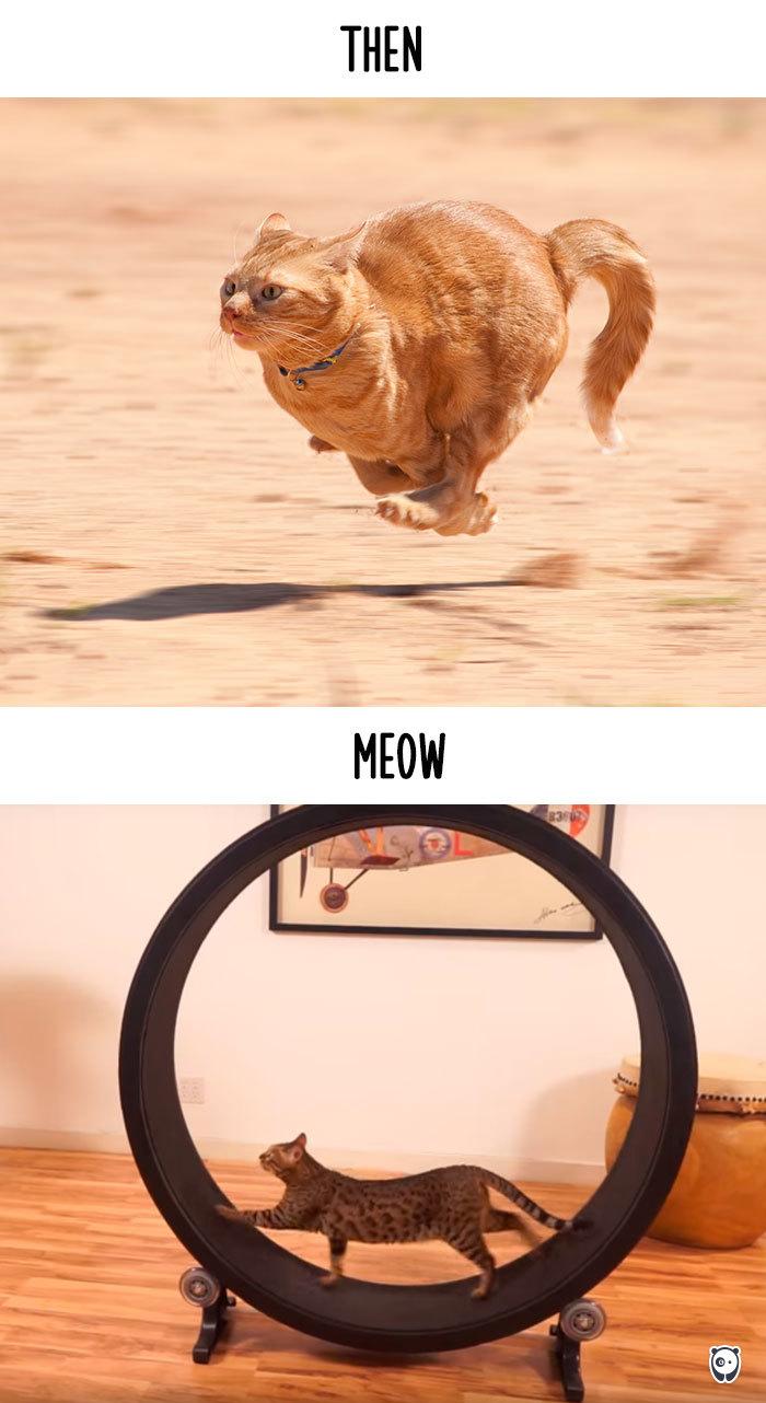 11-cats-change-life