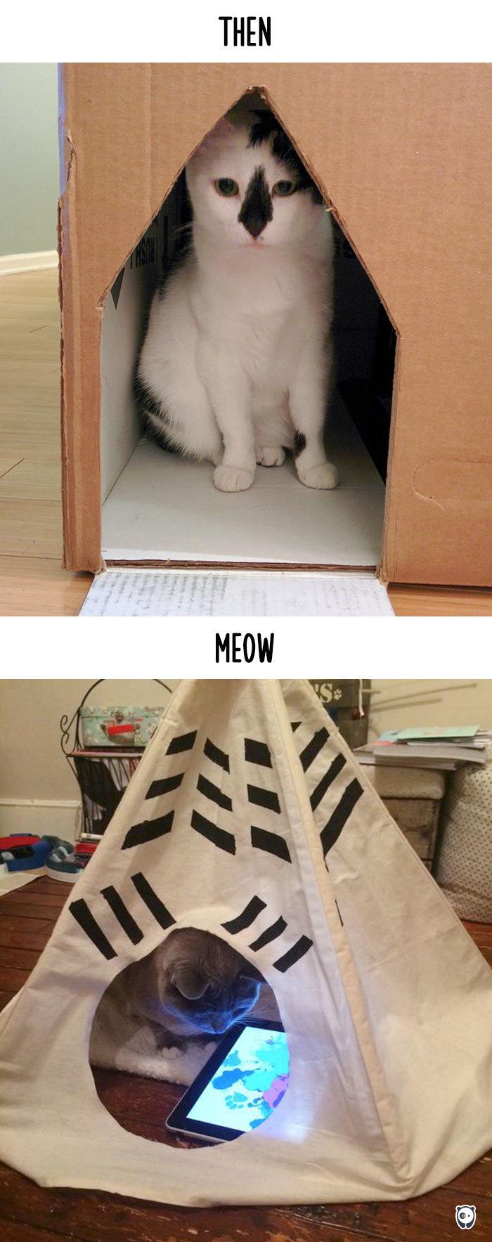 12-cats-change-life