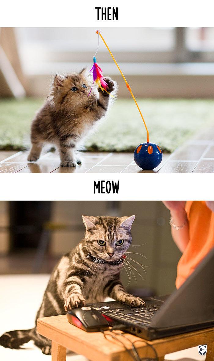15-cats-change-life
