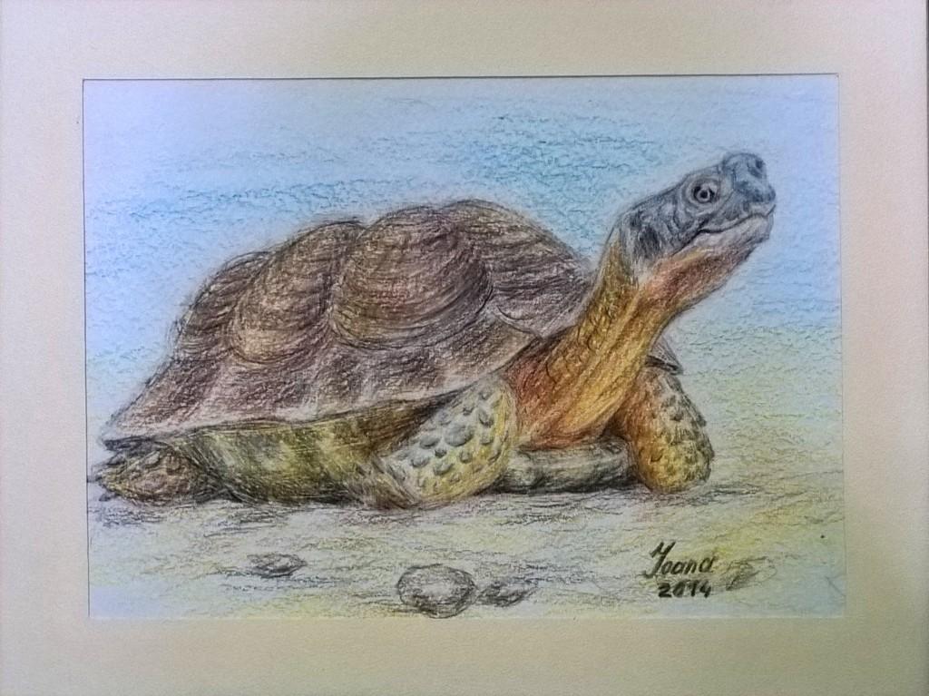 ioana scotigor local artist (15)