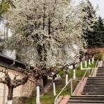 Винный маршрут: винзавод Dionysos-Mereni в Новых Меренах