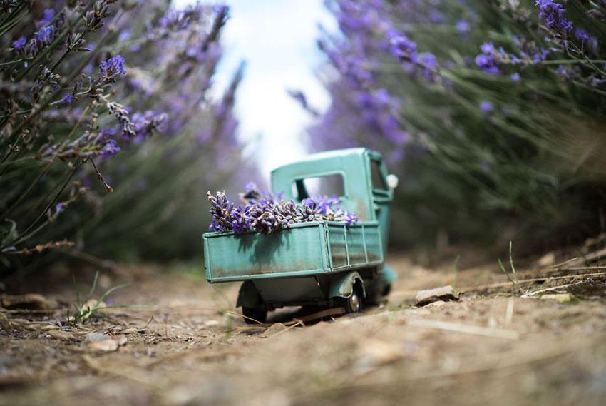 Lavender-delivery-Hitchin-573af8fb9da3e__880