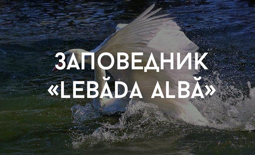Leova_1
