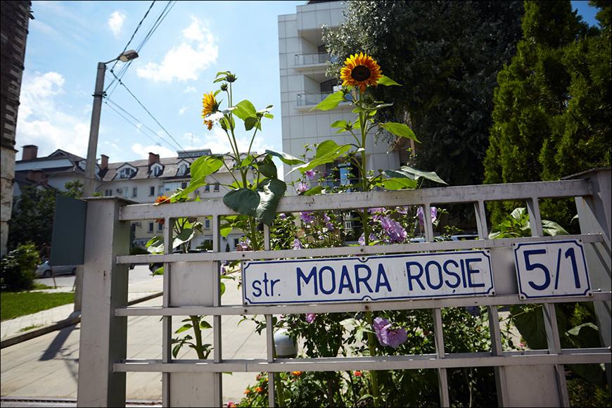 moara_rosie_12