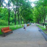 Кишиневская мэрия призывает граждан подарить паркам скамейки