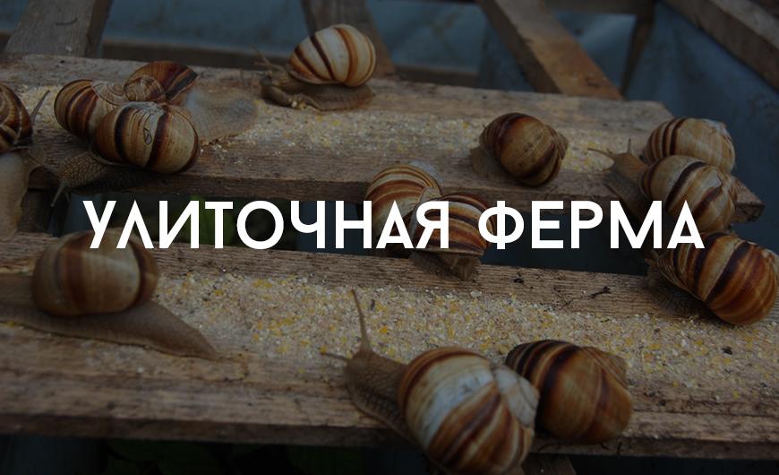 orhei_locals_6