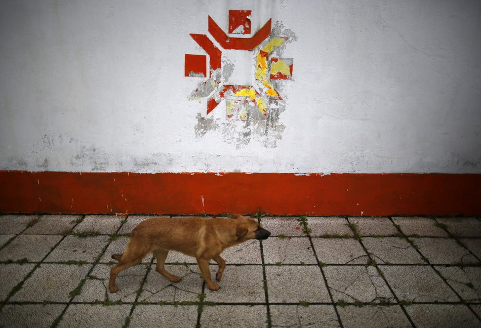 a-dog-walks-past-the-kosovo-stadium-where-the-opening-ceremonies-were-held