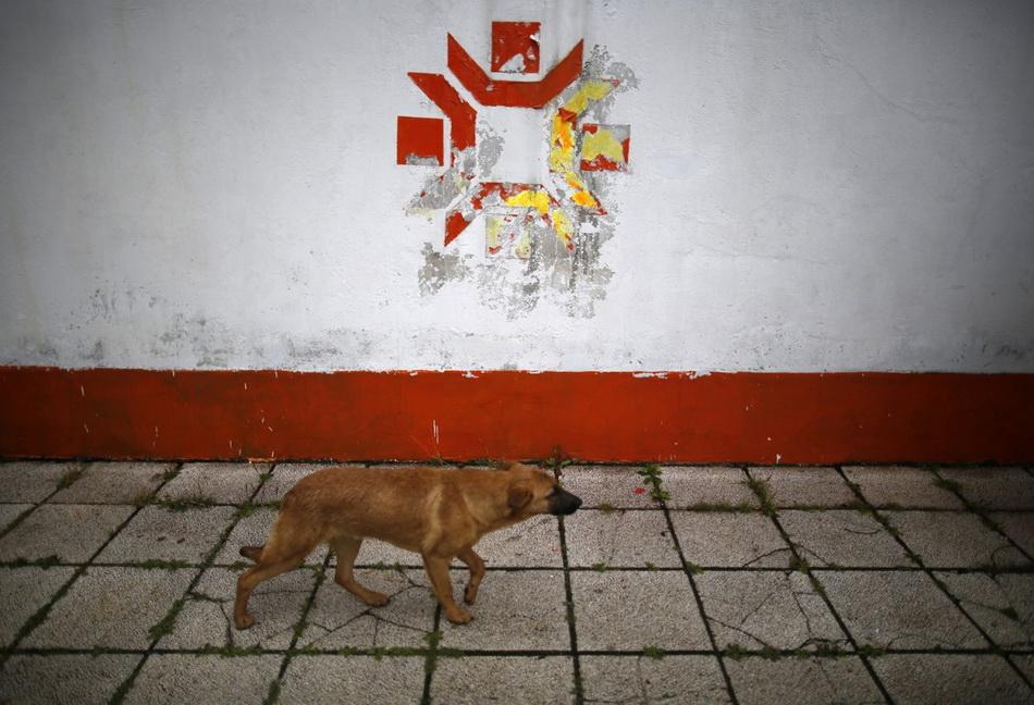 a-dog-walks-past-the-kosovo-stadium-where-the-opening-ceremonies-were-held