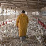 ООН призвала человечество объединить усилия в борьбе с устойчивостью к антибиотикам