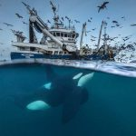 Объявлены финалисты конкурса Wildlife Photographer Of The Year 2016