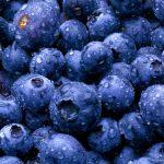 Молдавский фермер выращивает редкую для нашей страны ягоду — чернику