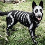 Тихий ужас: 20 жутких костюмов на Хэллоуин для домашних питомцев