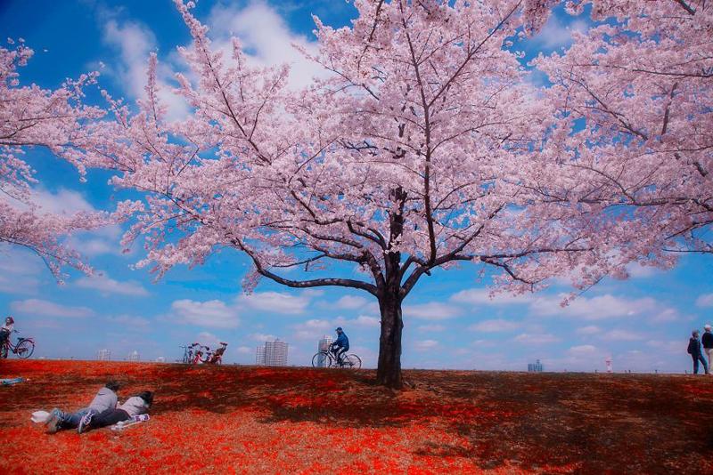 japan-street-photography-38-580888904b8da__880