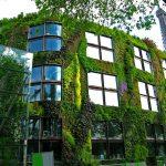 Власти Парижа доверили горожанам озеленение крыш и заборов