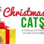 Благотворительная ярмарка в помощь уличным кошкам