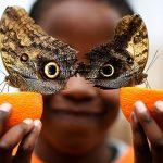 Агентство Reuters выбрало лучшие фото года