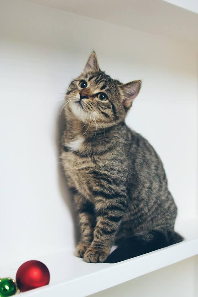 city-cats00002
