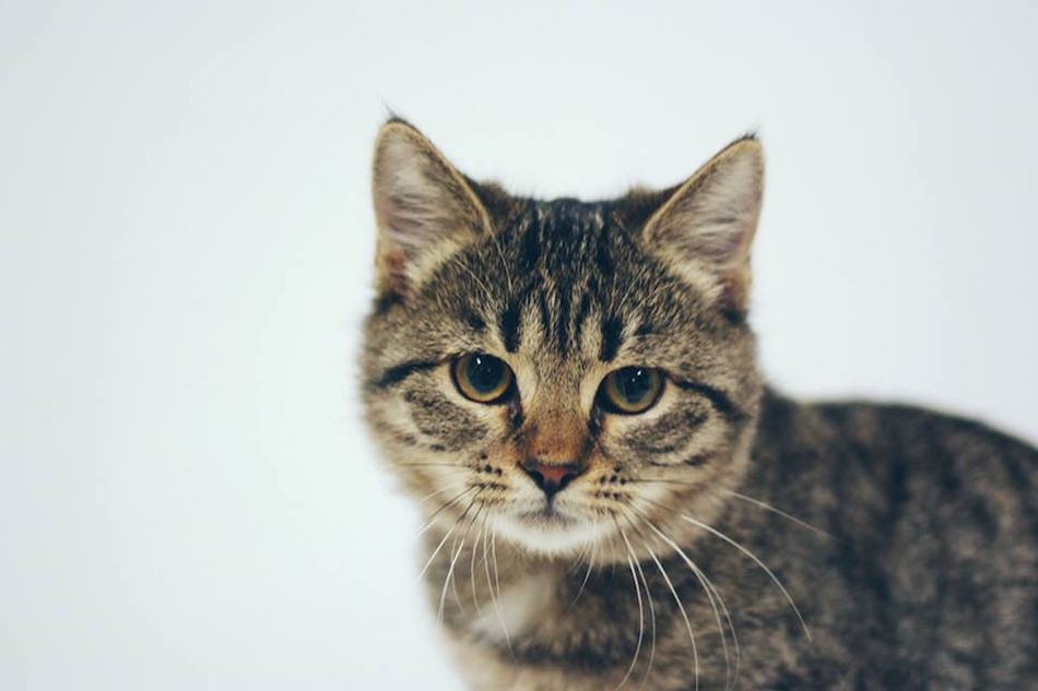 city-cats00004