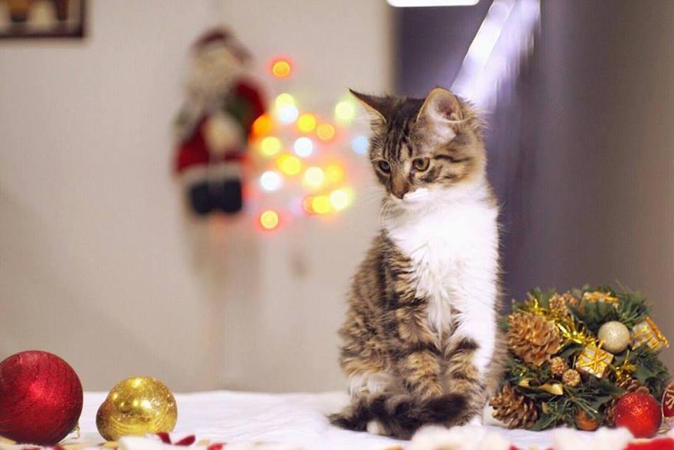 city-cats00022