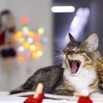 Новогодняя фотосессия спасённых котят, которым ищут семью