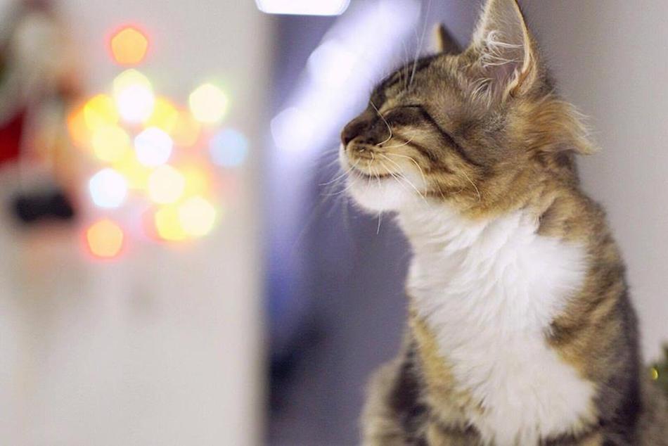 city-cats00025