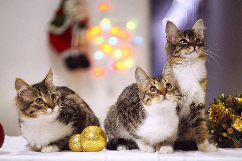 city-cats00028