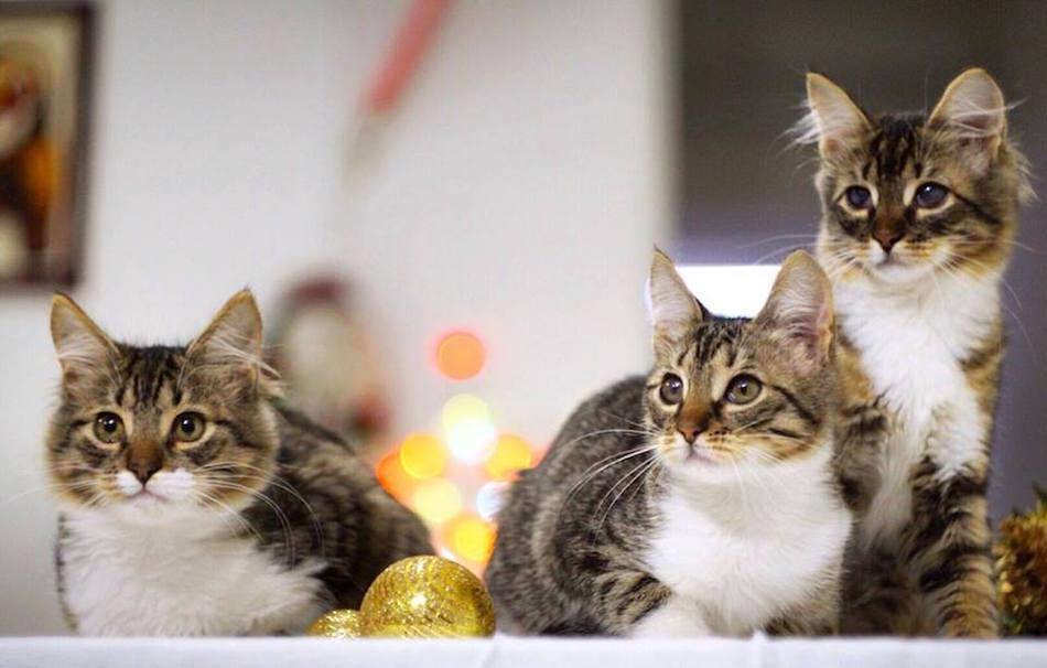 city-cats00029