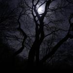 Румынский лес Хойя-Бачу назван самым таинственным местом в мире