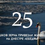 Цифра дня: сколько мешков зерна привезли живущим на Днестре лебедям