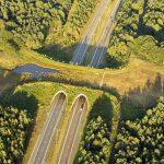 Экодуки: 10 невероятных мостов для животных