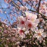 Владельцы фруктовых садов могут получить грант на развитие