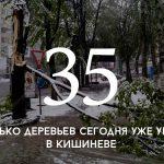 Цифра дня: в Кишиневе падают деревья