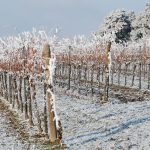 Коротко и ясно: как апрельский снег скажется на урожае