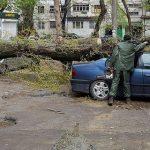 Как сделать так, чтобы не падали деревья. Секреты городской сильвикультуры
