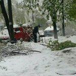 Фото дня: Шашлыки на дровах из упавших деревьев