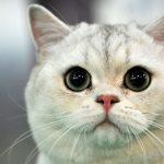 В Ирландии открылась вакансия мечты — обниматель котиков