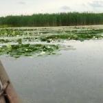 Это красиво: На озере Белеу распустились кувшинки