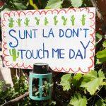 В Кишиневе пройдёт фестиваль кактусов Don't Touch Me Day II