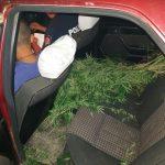 100 кустов конопли везли в машине 4 молодых человека. Полиция остановила их у села Суслень