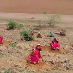 В Индии высадили 66 млн. деревьев за 12 часов
